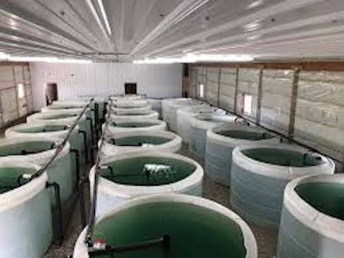 aquaponics natural light greenhouse