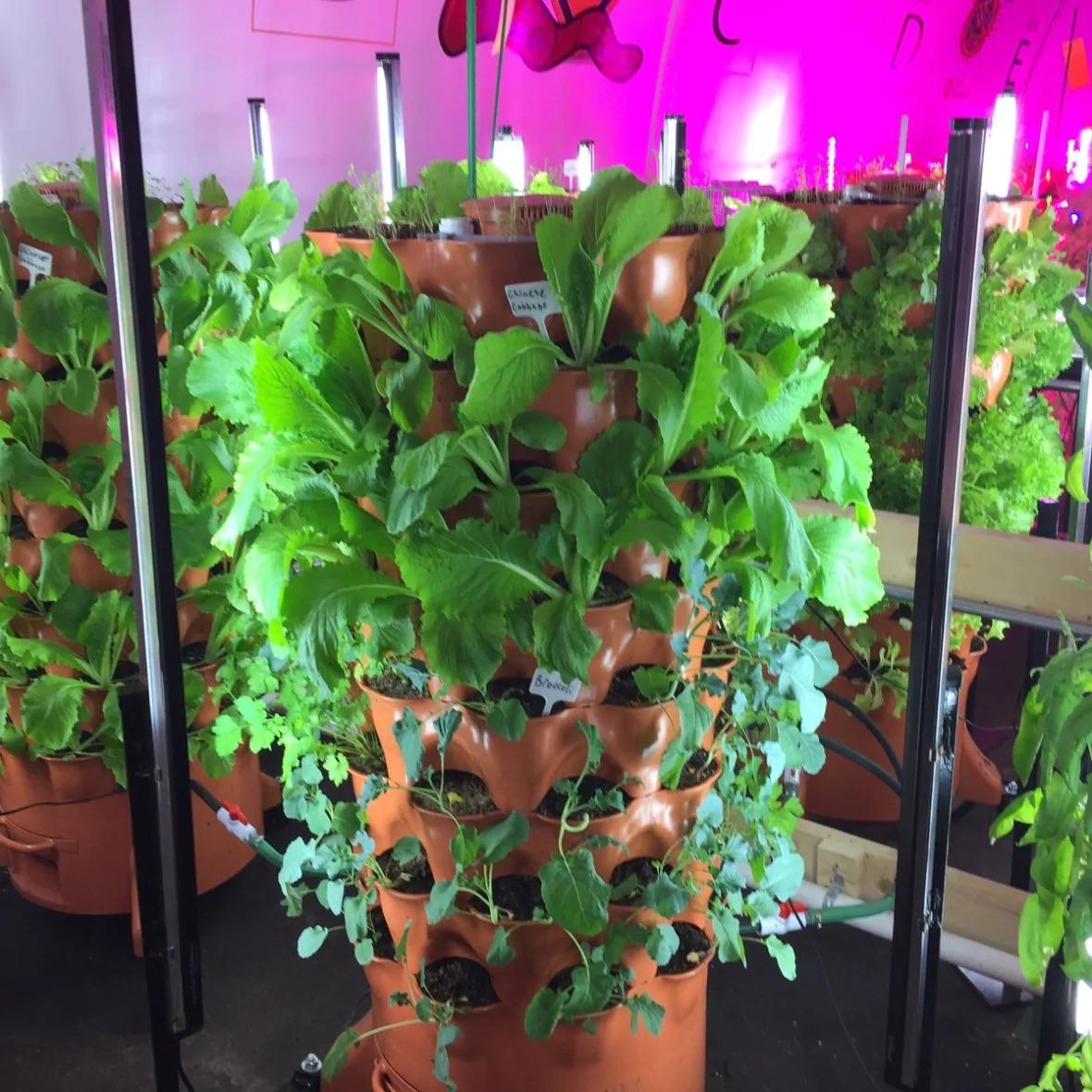 inside regina food bank greenhouse